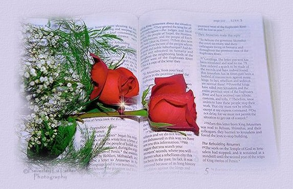 Scriptures on Bereavement pic